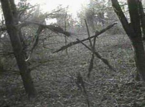 Where Are They Now?  The Blair Witch